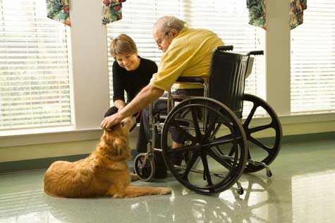 Animal-Assisted-Therapy-Practice